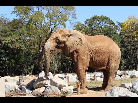 Discovery zoologico de Belo Horizonte - lindos animais fantastico FULL HD (Discovery animal)