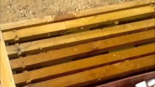Bees تربية النحل بجامعة الملك سعود الجزء الاول
