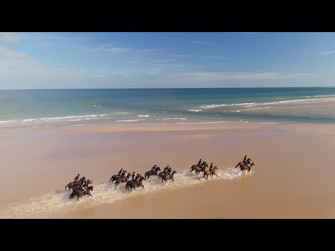 Kings Troop Royal Horse Artillery On Holkham Beach Giving Their Horses A Holiday From London.