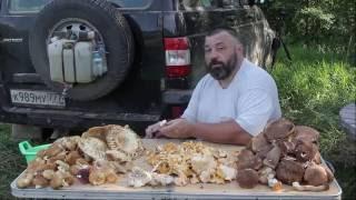 Рецепт соленых консервированных грибов на зиму без ботулизма.