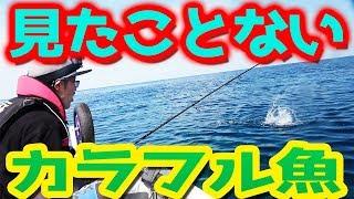 【所持金0円で即終了 釣り生活3 #5】みたことないカラフル魚を釣り上げた