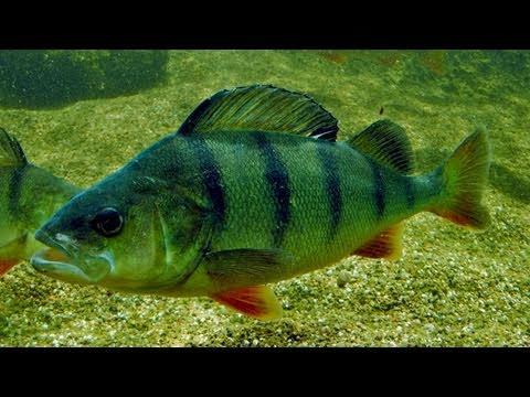 AQUA Freshwater Aquarium (AQUA Ferskvandscentret, Danmark)