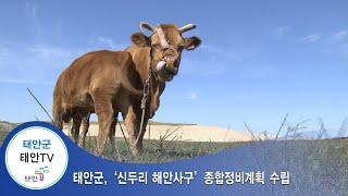 태안TV - 태안군, `신두리 해안사구' 종합정비계획 …