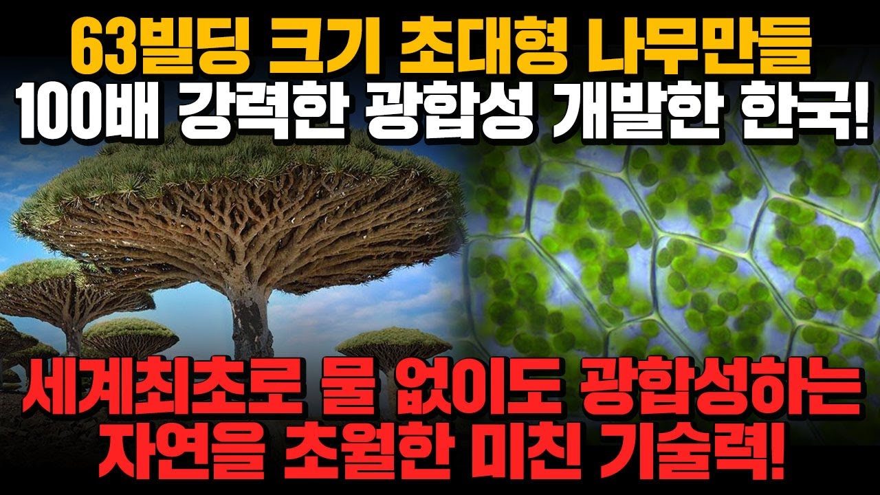 [경제] 63빌딩 크기 초대형 나무만들 100배 강력한 광합성 개발한 한국! 세계최초 물 없이도 광합성시키는 자연을 초월한 미친 기술력!!