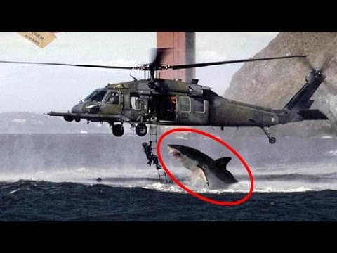 Download 5 Ataques de Tubarões Inacreditaveis