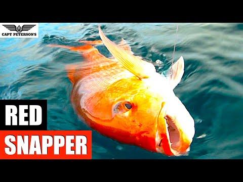 Red Snapper Fishing - St George Island, FL