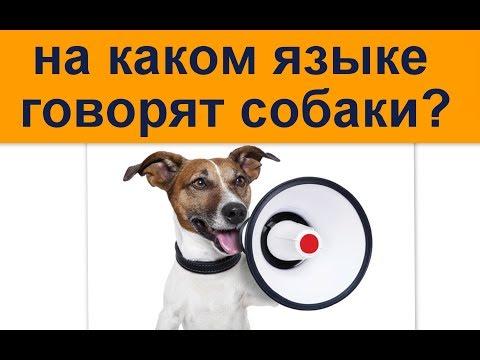на каком языке говорят собаки