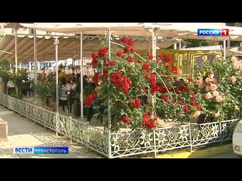 В Севастополе открылись летние веранды кафе