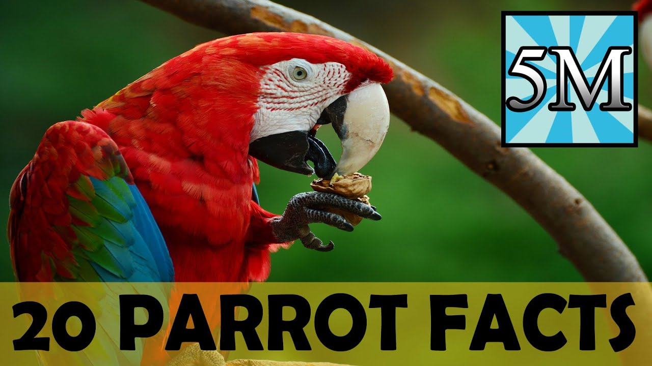 20 Parrot Facts - YouTube