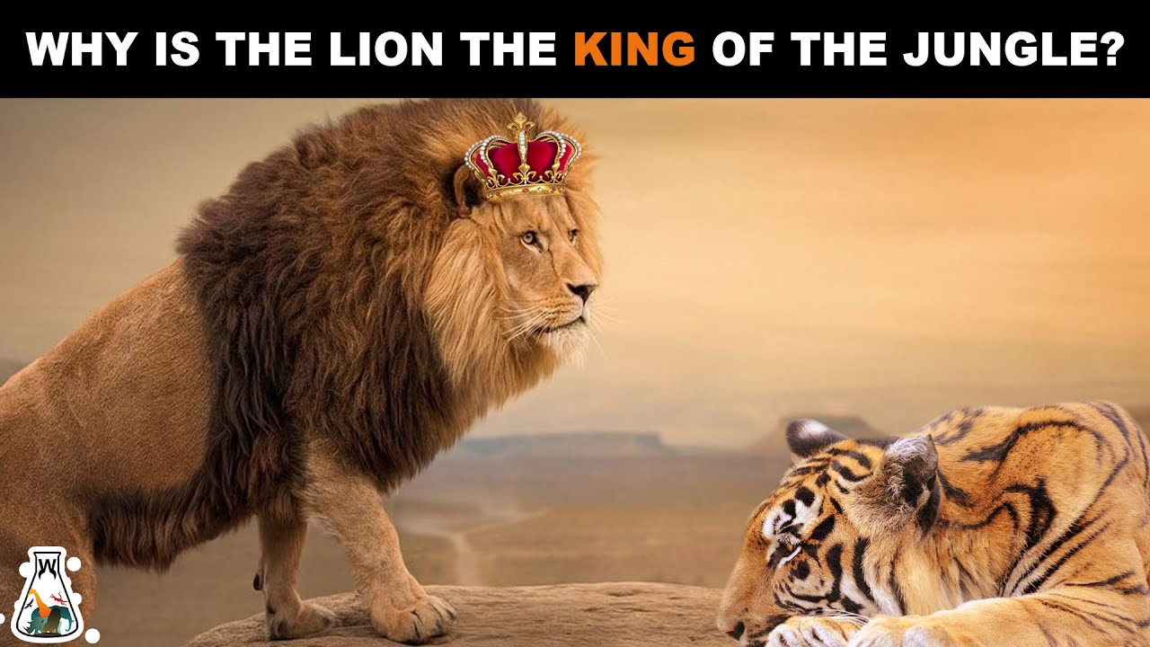 Download Why is The Lion Considered The King of The Jungle?