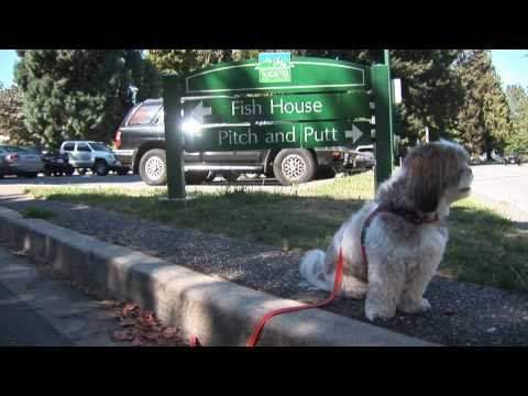 Stanley Park Shuffle Board Off Leash Court Area Review - Vancouver BC