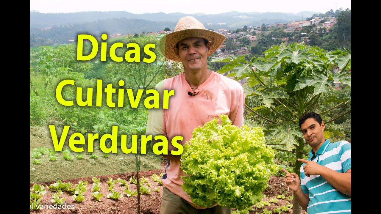 Dicas para cultivar verduras colha plantas e alegria for Cultivar vegetales en casa