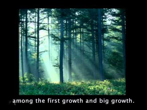 TED Talks - William McDonough: Cradle to Cradle Design