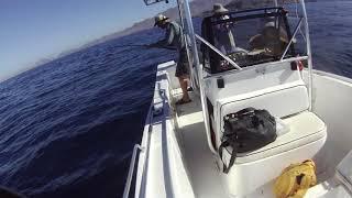 Double Dorado Hook Up PV Sportfishing Charters in Puerto Vallarta Mexico