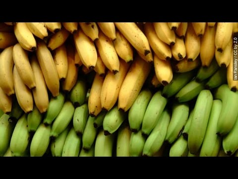 This Fungus Is Bad News For The World's Bananas - Newsy
