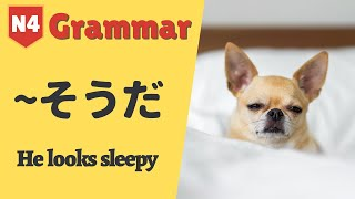 Today we are going to go over how to use the grammar そうだ. ✅ PLEASE SUBSCRIBE to our channel for more JLPT Vocabulary and Kanji learning videos!