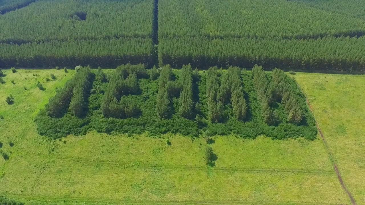 В Челябинской области из елей выросла надпись «Ленин»