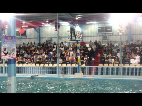 dolphin show in riyadh part4