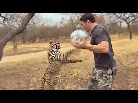 Cheetahs Play Football - Deadly 60 - Series 3 - BBC