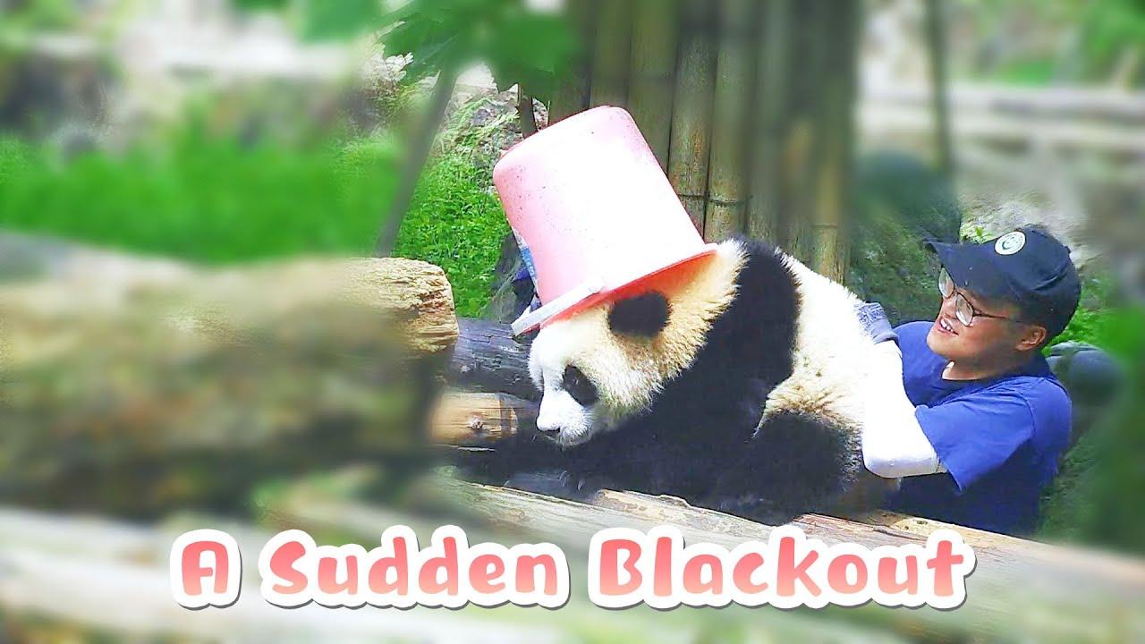 Panda Experiences A Sudden Blackout   iPanda