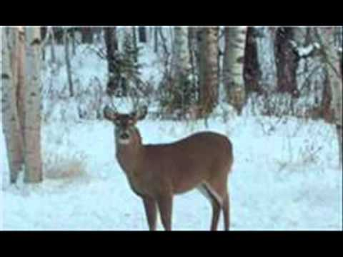 Star Of The East by John and Susan Dec. 2010.wmv