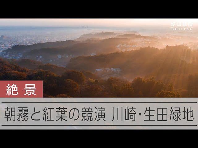 朝霧と紅葉の競演をドローンで撮影 川崎・生田緑地