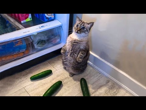 Cats And  Dogs In Funny Situations   Try Not To Laugh