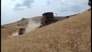 Columbia County wheat harvest