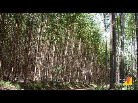 Clique e veja o vídeo Curso Cultivo de Eucalipto