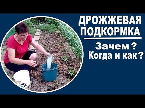 Дрожжевая подкормка для растений  Для чего нужна, как разводить, когда применять