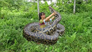 Primitive Skills Catch Big Python By Hand - Giant Anaconda Python Vs Girl
