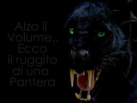 Video clip hay Panther Roar Sound Effect(0 Bgv0bQXTM), Xem ...