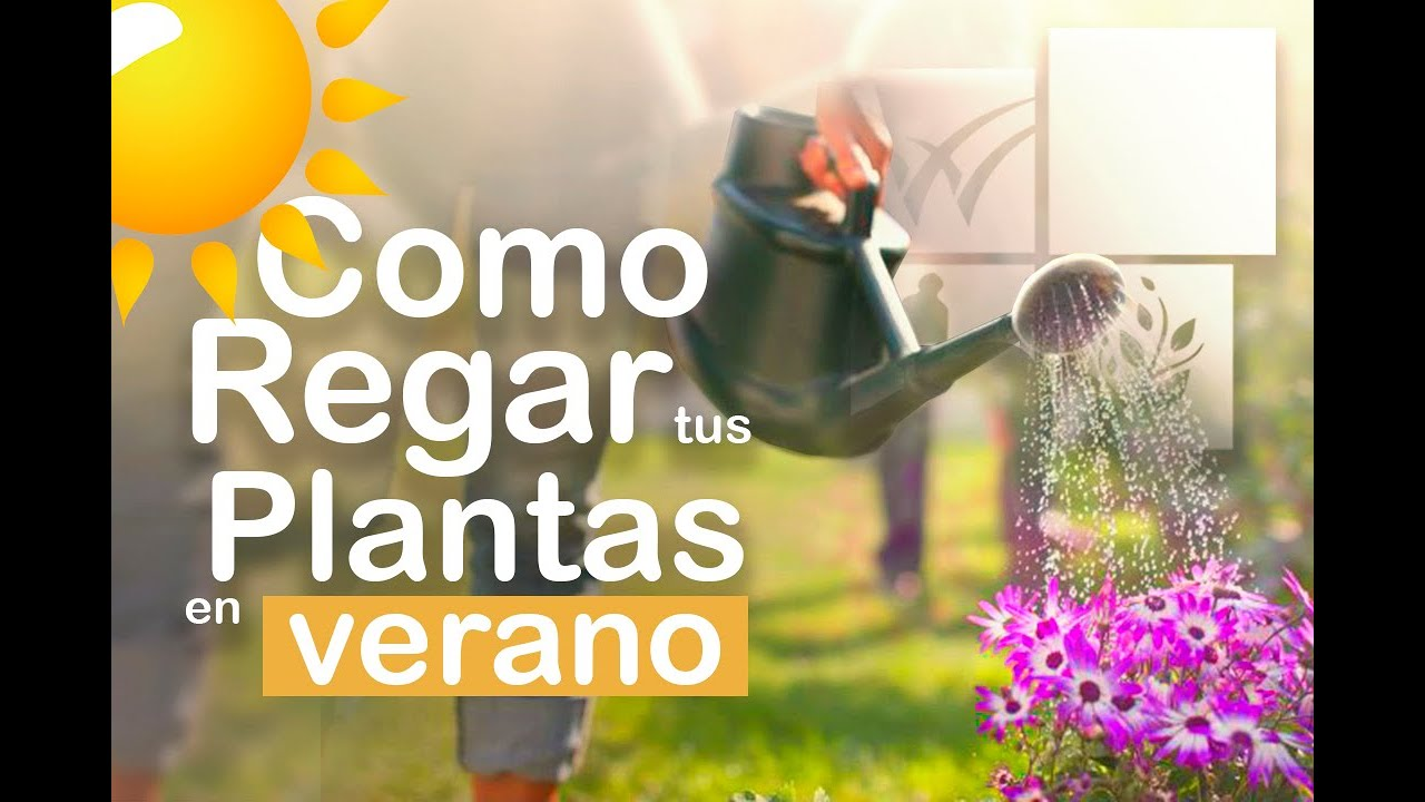 COMO REGAR nuestras PLANTAS EN VERANO / Jardín urbano