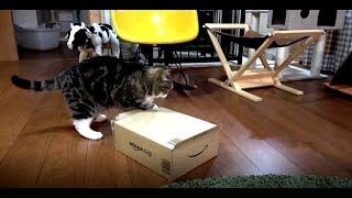 どうしても入りたいねこ3。-Maru wants to get into it by all means 3.-