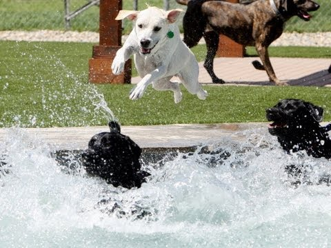 MURRIETA: Dog water park opens to public