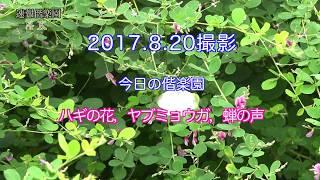 2017.8.20撮影 今日の偕楽園(ハギの開花状況,ヤブミョウガ,蝉の声)4K