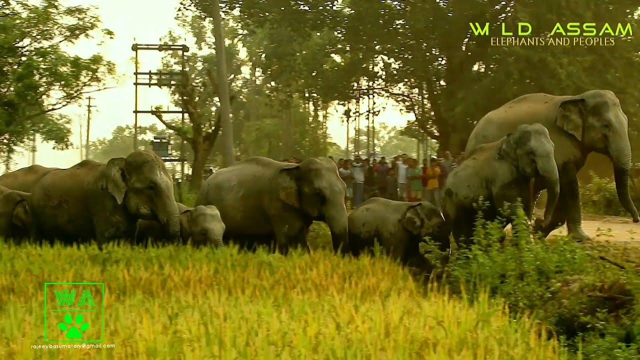 ELEPHANTS IN THE VILLAGE II DOIGRUNG