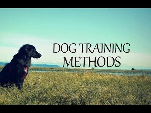 A Look At Dog Training Methods