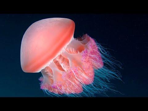 Красивые медузы в аквариуме
