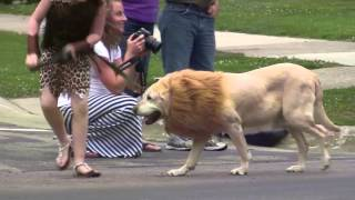 Sights and sounds of the 2015 Pet Parade