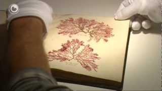 Botanikus krijt unyk herbarium
