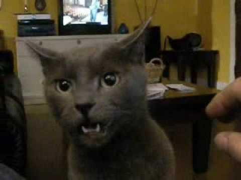 michigan wild cats