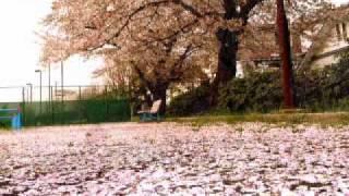 あの時のお花見やら、なんやかんや、 とりあえず近年の桜たち、まとめて...