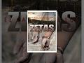 El Cartel De Los Zetas - Película Completa