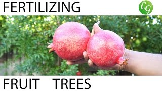 how to fertilize fruit trees   fertilizing schedule guide
