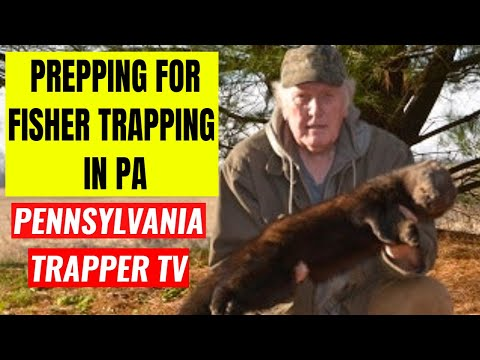 Prepping For Fisher Trapping In Pa