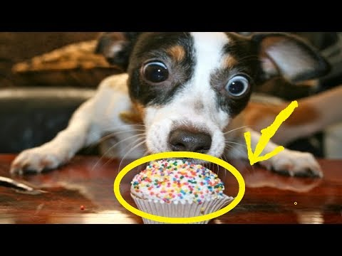 ♥Cute Dogs Doing Funny Things Compilation 2017 | Cutest dog in the world | Cute dogs clips 2017