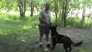 Dog Training | Nine Preparatory Basic Exercises On Obedience