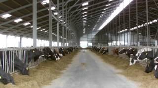 Michviehbetrieb mit 1200 Kühen mit 60.iger Melkkarrusel u. einer BGA