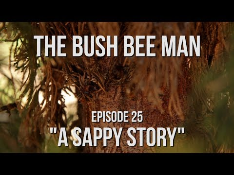 "How Bees Use Tree Sap - Episode 25: ""A Sappy Story"""